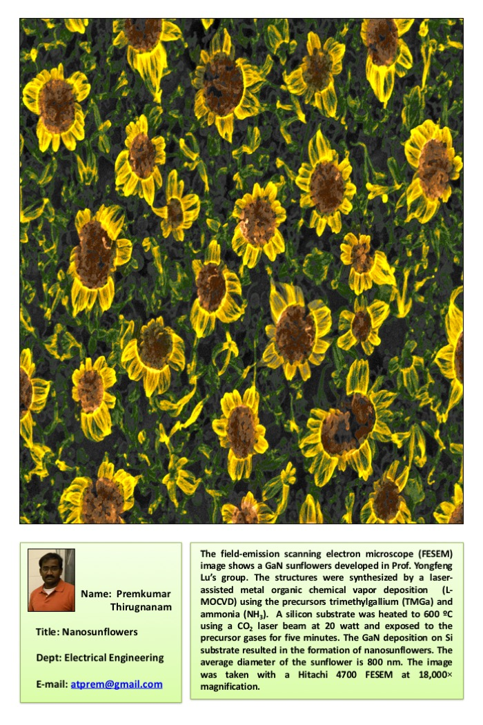 Premkumar nano sunflowers